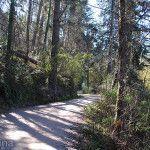 Serpenteante Camino