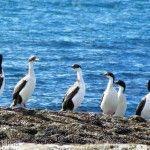 Aves en Playa La Tranquera