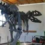 Museo Paleontológico de El Chocón