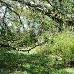 Por el Bosque en Laguna Rosales