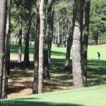Bosque y Golf