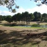 Bosque Golf y Laguna