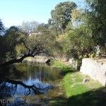 Arboles y Arroyo