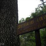 Quebracho Colorado Parque Nacional Chaco
