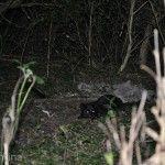 Trekking Nocturno Gato Salvaje