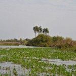 Verdes Plantas en el Laguna Ibera Lado Río Miriñay