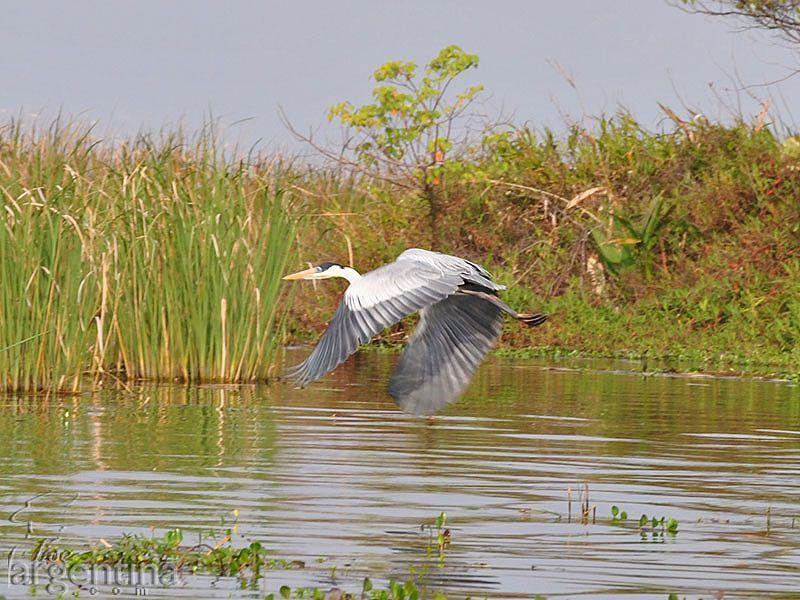 Volando por Laguna Ibera Lado Río Mirinay