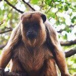 Trekking en el Sendero de los Monos