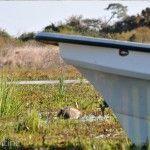 Lancha Laguna Ibera Lado Río Corriente