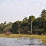 Paisaje Laguna Ibera Lado Río Miriñay