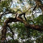 Sendero de los Monos Arboles