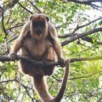 Sendero de los Monos Mirandote