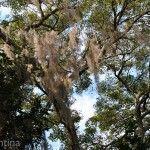 Sendero de los Monos Vegetación