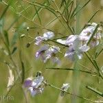 Flores de Ituzaingo