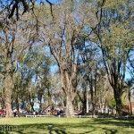 Arboleda Parque Mitre