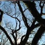 Arboles en Parque Mitre