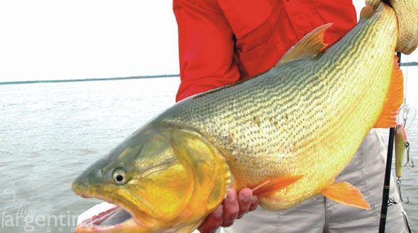 Pesca en Paso de la Patria