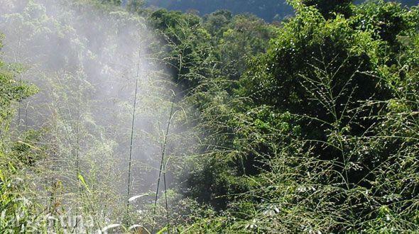Reserva Natural Estricta San Antonio
