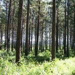 Bosque Sendero de Bomberos