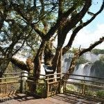 Arboles Parque Nacional Iguazu
