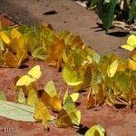 Colonia de Mariposas Parque Nacional Iguazu