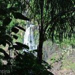 En la Selva Parque Nacional Do Iguacu