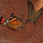 Mariposas Parque Nacional Iguazu