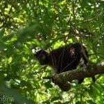 Mono Parque Nacional Iguazu