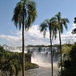 Palmeras Parque Nacional Iguazu