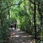 Senderos Parque Nacional Iguazu