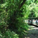 Tren Ecologico Parque Nacional Iguazu