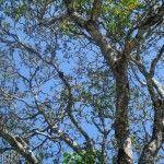 Vegetacion Parque Nacional Do Iguacu