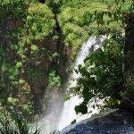 Verde Parque Nacional Iguazu