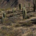 Borgata, sitio arqueológico de Cachi