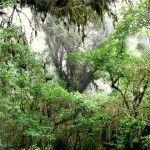 Parque Nacional Baritu