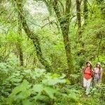 Explorando la Selva