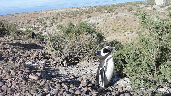 Cabo 2 Bahías Camarones