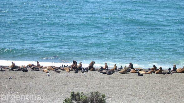 Península Valdes Puerto Madryn