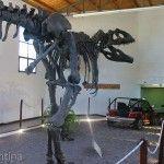 Replica Giganotosaurus Carolinii