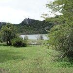 Arbustos en Laguna Rosales