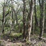 Bosque Laguna Rosales