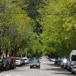 Calles Arboladas