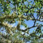 Cielo y Verde Laguna Rosales