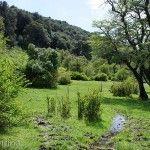 Verde en Laguna Rosales